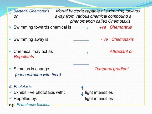 bacteria shape and size Perhaps the most elemental structural property of bacteria is their morphology (shape their small size the bacterial cell wall differs from that of.
