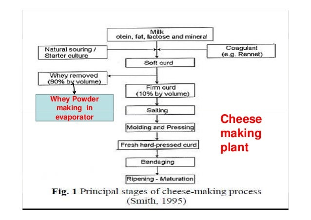 Whey Powder making in Cheese making plant making in evaporator
