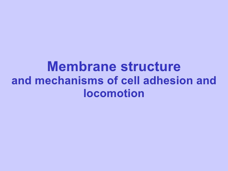 Membrane structure and mechanisms of cell adhesion and locomotion