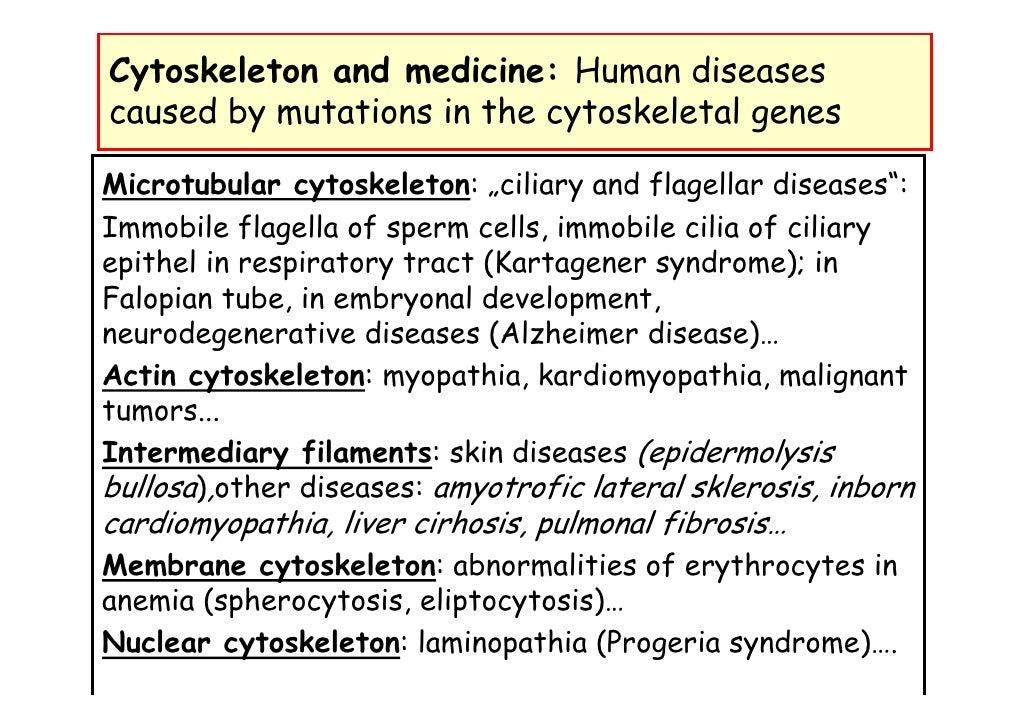 L05 Cytoskeleton