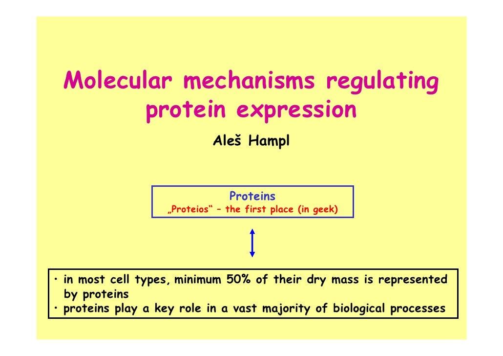 Molecular mechanisms regulating        protein expression                             Aleš Hampl                          ...