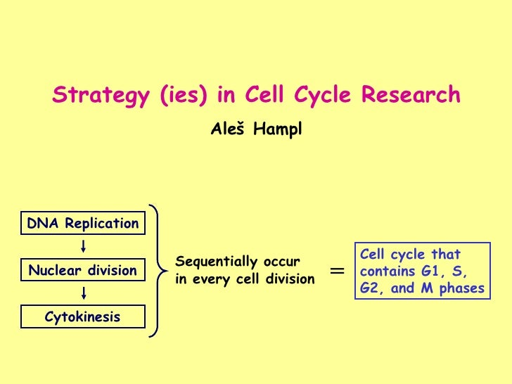 Strategy (ies) in Cell Cycle Research Aleš Hampl DNA Replication Nuclear division Cytokinesis Sequentially occur  in every...