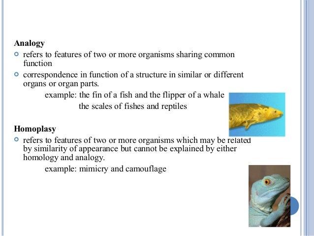 Vertebrate Anatomy Term And Concepts