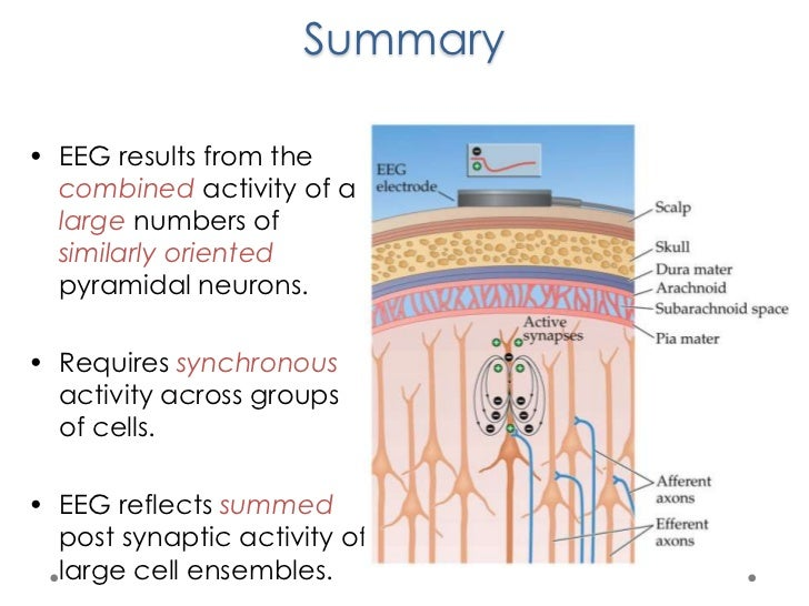 Biophysical Basis Of Eeg 8 Images Biophysics Ofcardiovascularsystem Fin Biophysical Basis