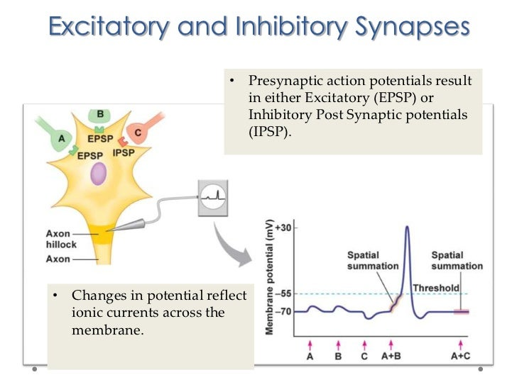 Suboxone neuron and post synaptic potentials