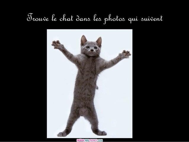 Trouve le chat dans les photos qui suivent