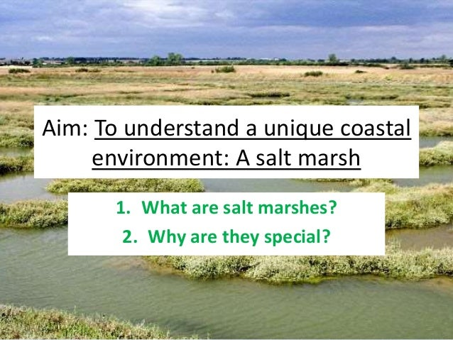 Aim: To understand a unique coastal environment: A salt marsh 1. What are salt marshes? 2. Why are they special?