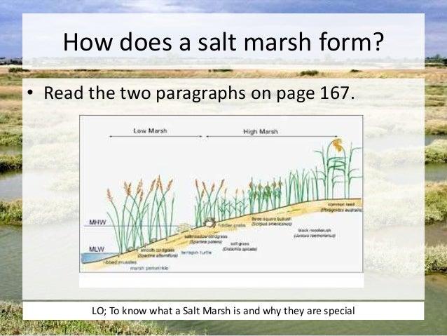 fisher salt spreader wiring diagram salt marsh diagram l11 salt marshes ap #13