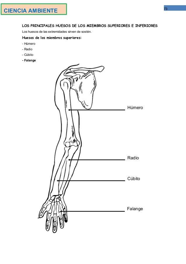 Moderno Pagina Para Colorear Huesos Componente - Dibujos Para ...