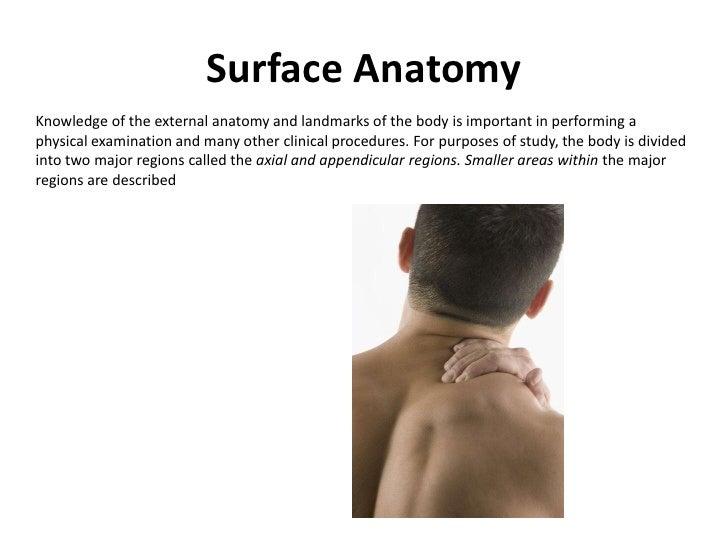Surface Anatomy Example
