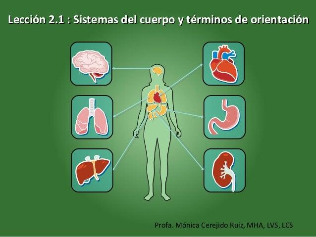L2 sistemas corporales
