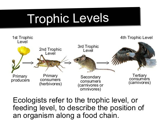 Describe An Example Food Chain With At Least 4 Trophic Levels 111