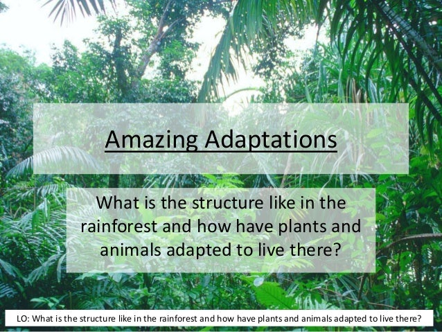Amazing Adaptations What is the structure like in the rainforest and how have plants and animals adapted to live there? LO...
