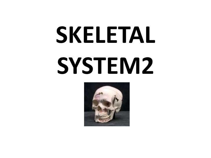 SKELETAL   SYSTEM2<br />