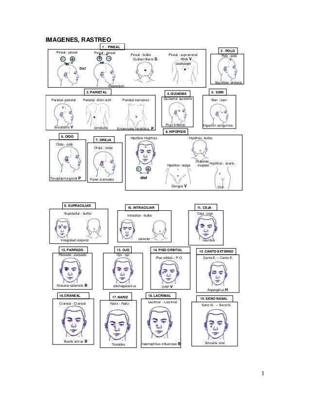 1 IMAGENES, RASTREO Pineal - pineal Pineal - bulbo Pineal - suprarrenal 1 . PINEAL 2 . POLO 3. PARIETAL Parietal- parietal...