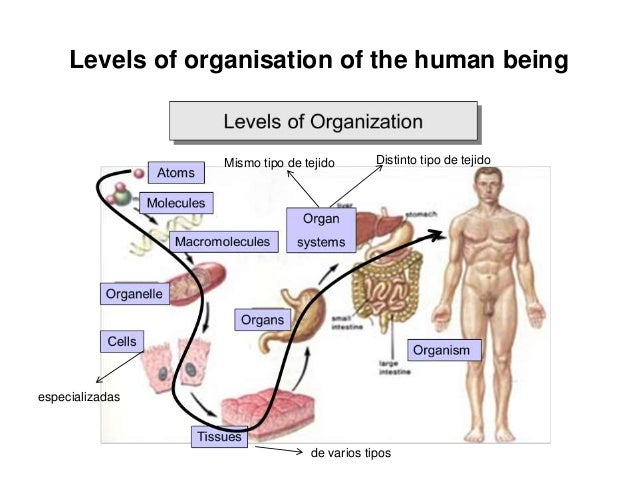 Unit 1. The organisation of the human body.