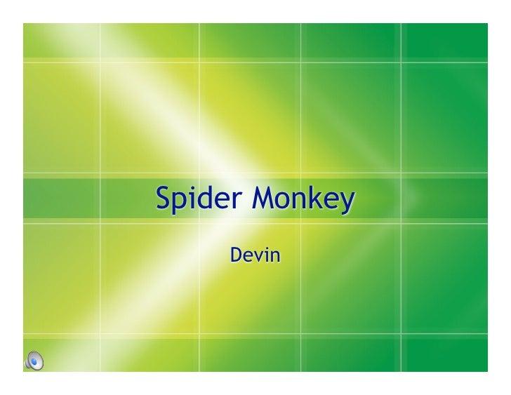 Spider Monkey     Devin