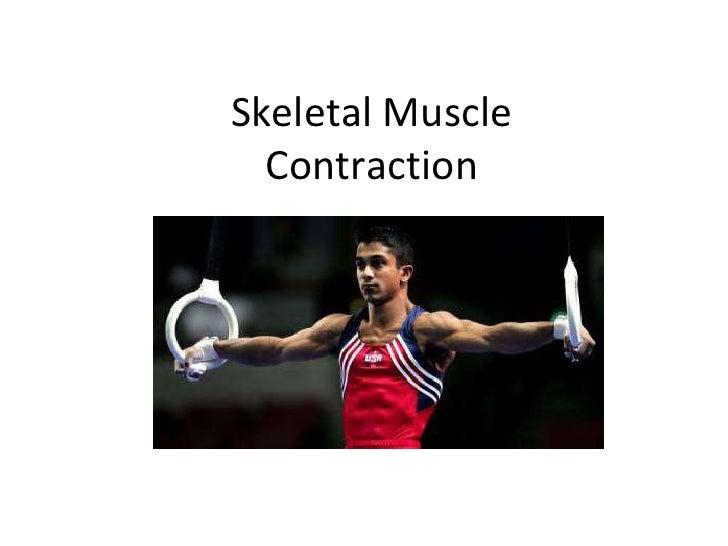 Skeletal MuscleContraction<br />