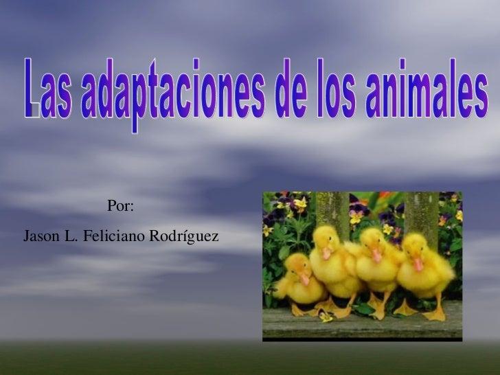 Por: Jason L. Feliciano Rodríguez Las adaptaciones de los animales
