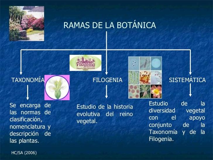 La bot nica como ciencia for Libros de botanica pdf