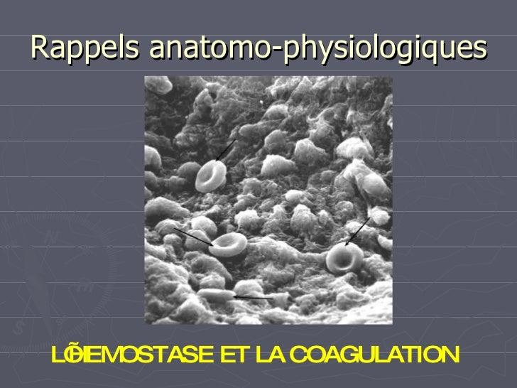 Rappels anatomo-physiologiques L'HEMOSTASE ET LA COAGULATION