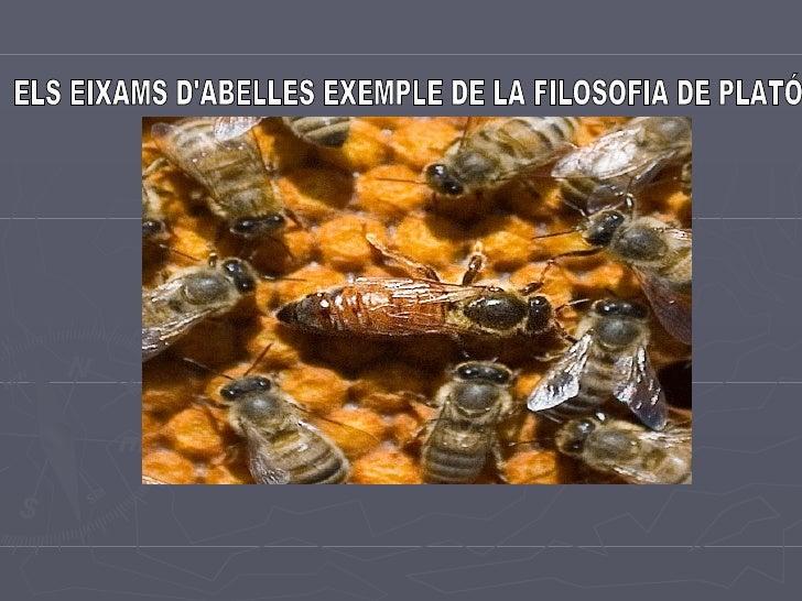 ELS EIXAMS D'ABELLES EXEMPLE DE LA FILOSOFIA DE PLATÓ