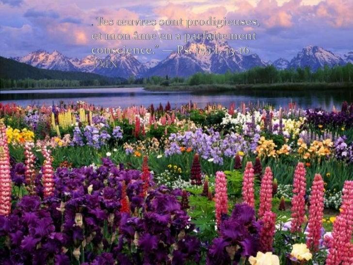 """. Tes œuvres sont prodigieuses, et mon âme en a parfaitement conscience."""" — Ps. 139:1,13-16. TMN<br />"""