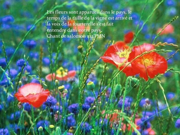 Les fleurs sont apparues dans le pays, le temps de la taille de la vigne est arrivé et la voix de la tourterelle s'est fai...