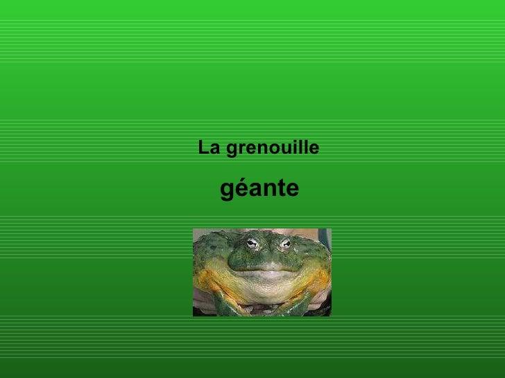 La grenouille  géante