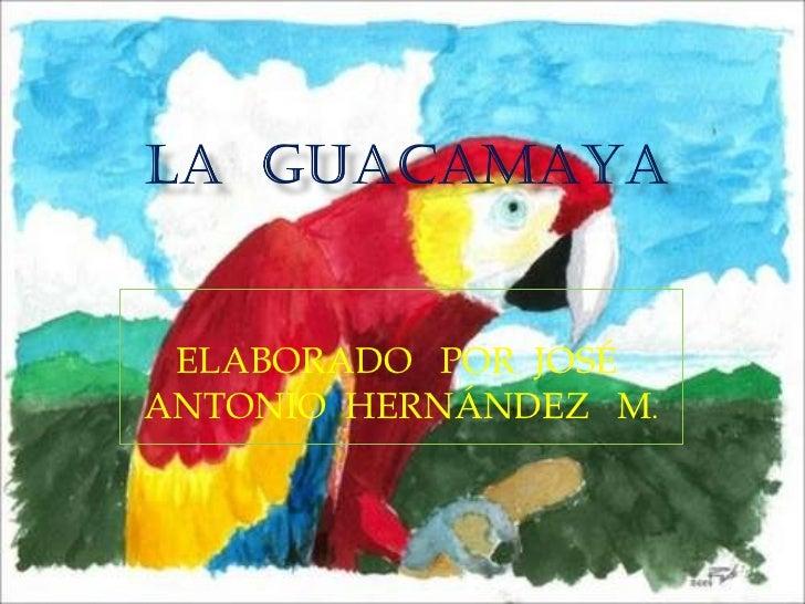 ELABORADO  POR  JOSÉ  ANTONIO  HERNÁNDEZ  M .
