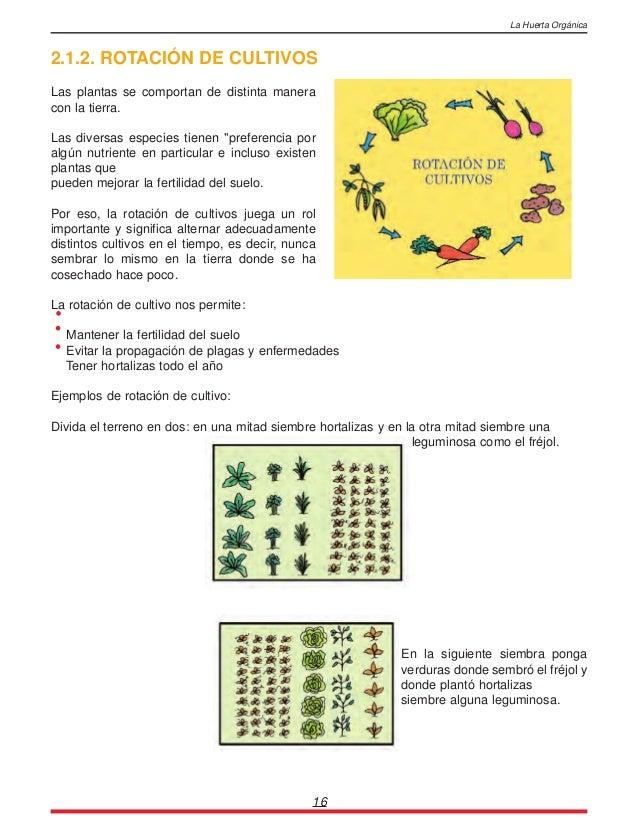La huerta organica for Plantas para huerta organica