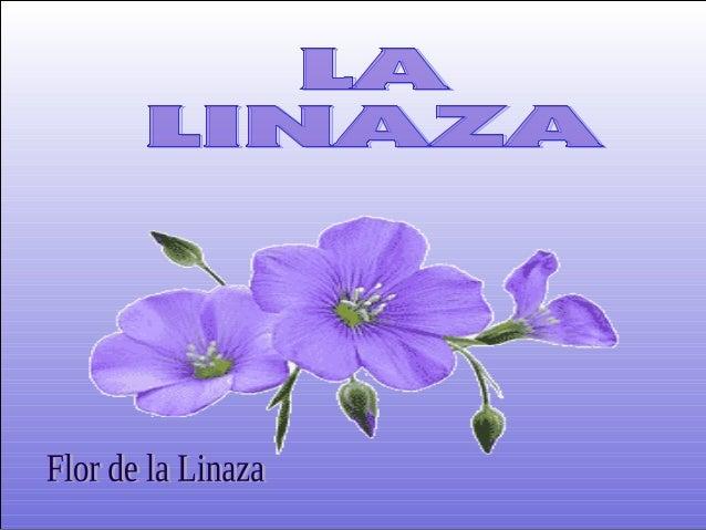 En los últimos años se ha publicado una gran cantidad de información acerca de los efectos curativos de la semilla de lina...