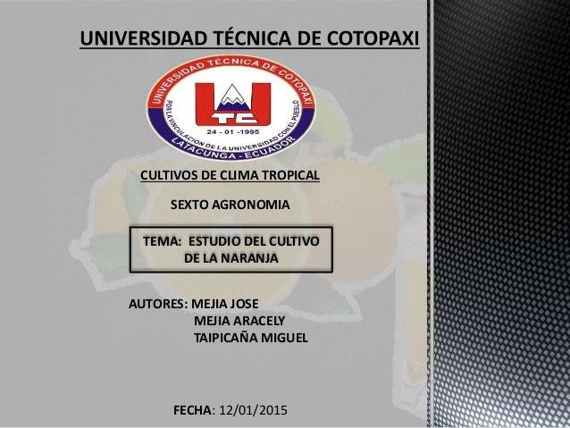 CULTIVOS DE CLIMA TROPICAL SEXTO AGRONOMIA TEMA: ESTUDIO DEL CULTIVO DE LA NARANJA AUTORES: MEJIA JOSE MEJIA ARACELY TAIPI...