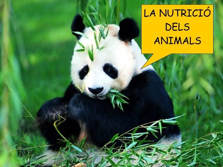 LA NUTRICIÓ DELS ANIMALS