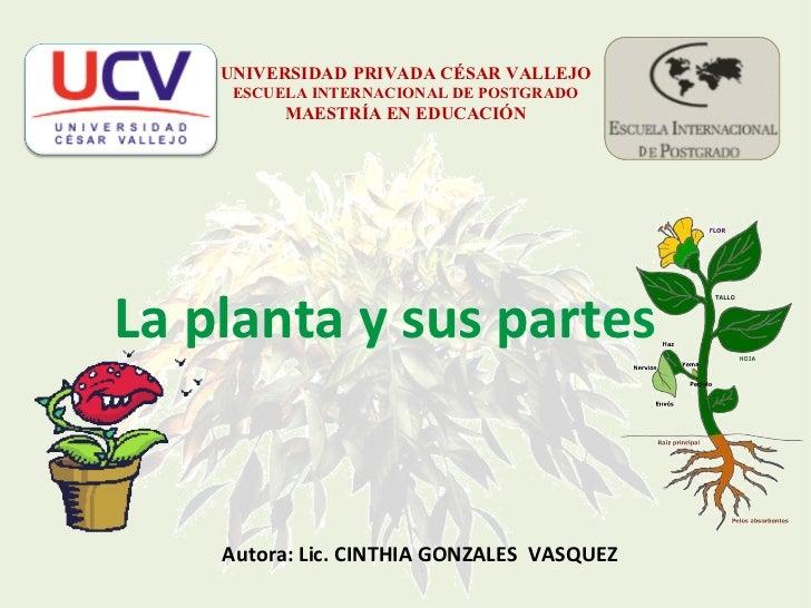 UNIVERSIDAD   PRIVADA CÉSAR VALLEJO ESCUELA INTERNACIONAL DE POSTGRADO MAESTRÍA EN EDUCACIÓN La planta y sus partes Autora...