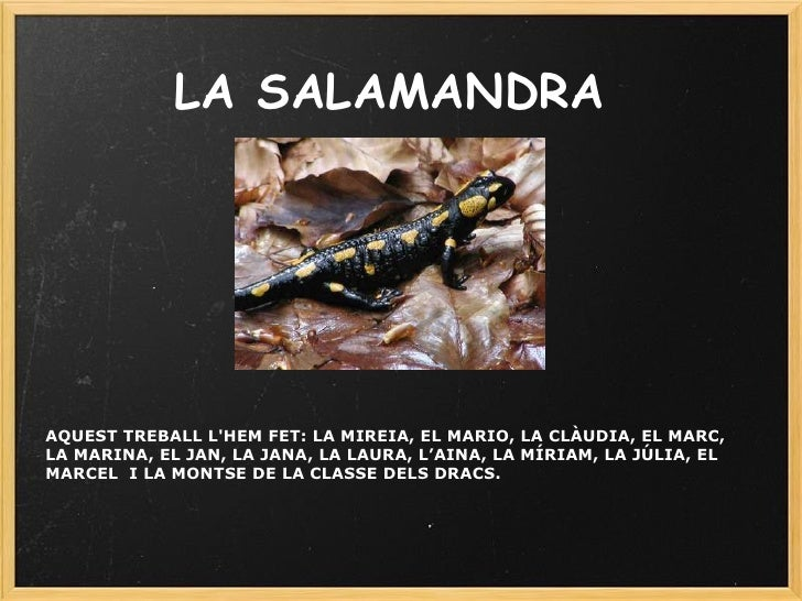 LA SALAMANDRA AQUEST TREBALL L'HEM FET: LA MIREIA, EL MARIO, LA CLÀUDIA, EL MARC, LA MARINA, EL JAN, LA JANA, LA LAURA, L'...