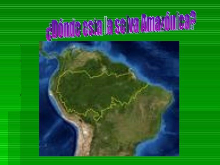 La selva amazonica for Marmol donde se encuentra