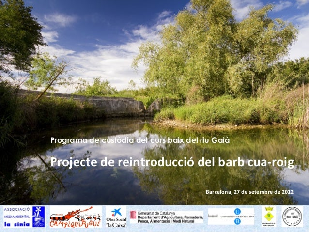 Programa de custòdia del curs baix del riu GaiàProjecte de reintroducció del barb cua-roig                                ...