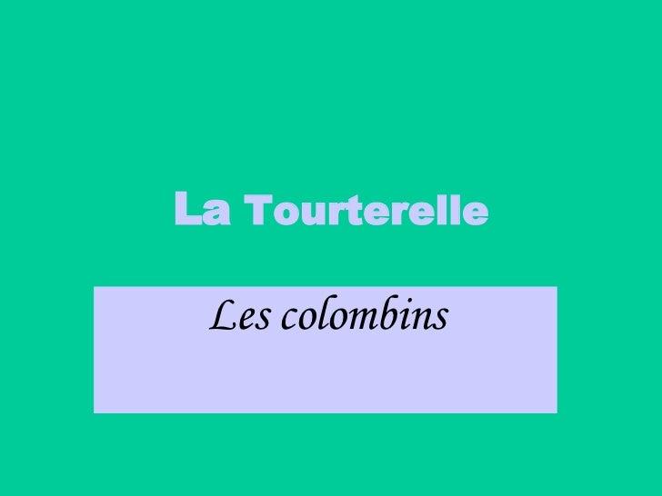 La  Tourterelle Les colombins
