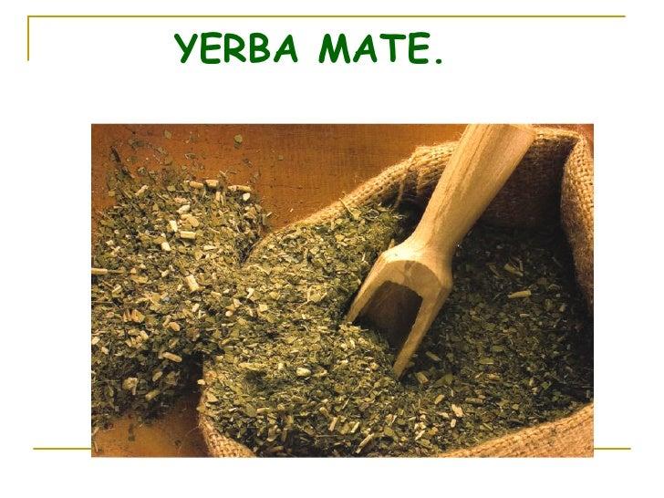 Circuito Productivo De La Yerba Mate : La yerba mate verdadero
