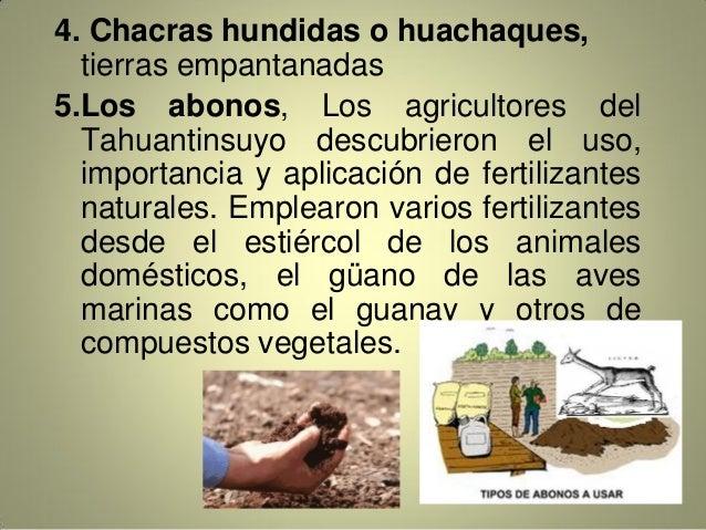 4. Chacras hundidas o huachaques, tierras empantanadas 5.Los abonos, Los agricultores del Tahuantinsuyo descubrieron el us...