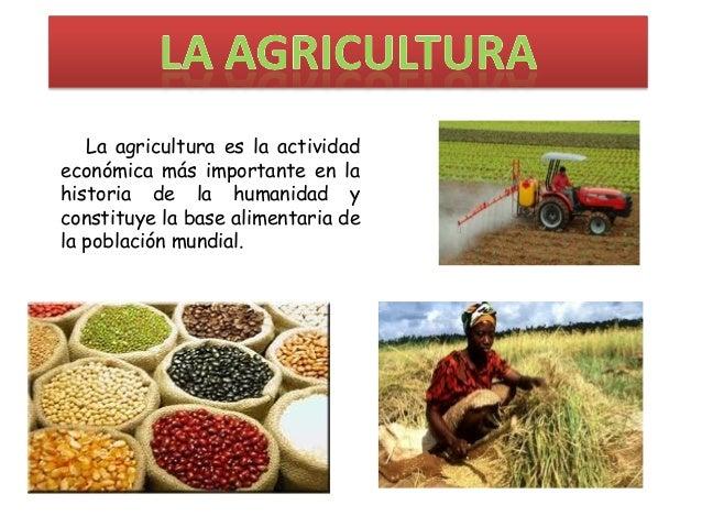 La agricultura de subsistencia for Que es la asociacion de cultivos