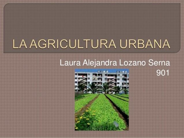 Laura Alejandra Lozano Serna                         901