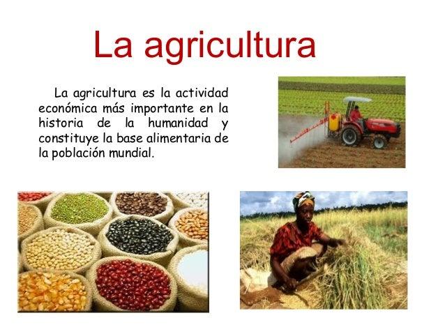 La agricultura tipos y principales cultivos en la for Que es una mesa de cultivo