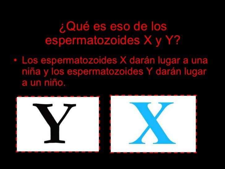 ¿Qué es eso de los       espermatozoides X y Y? • Los espermatozoides X darán lugar a una   niña y los espermatozoides Y d...