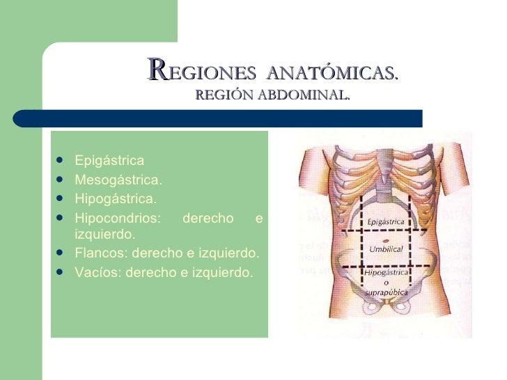La anatomia humana.