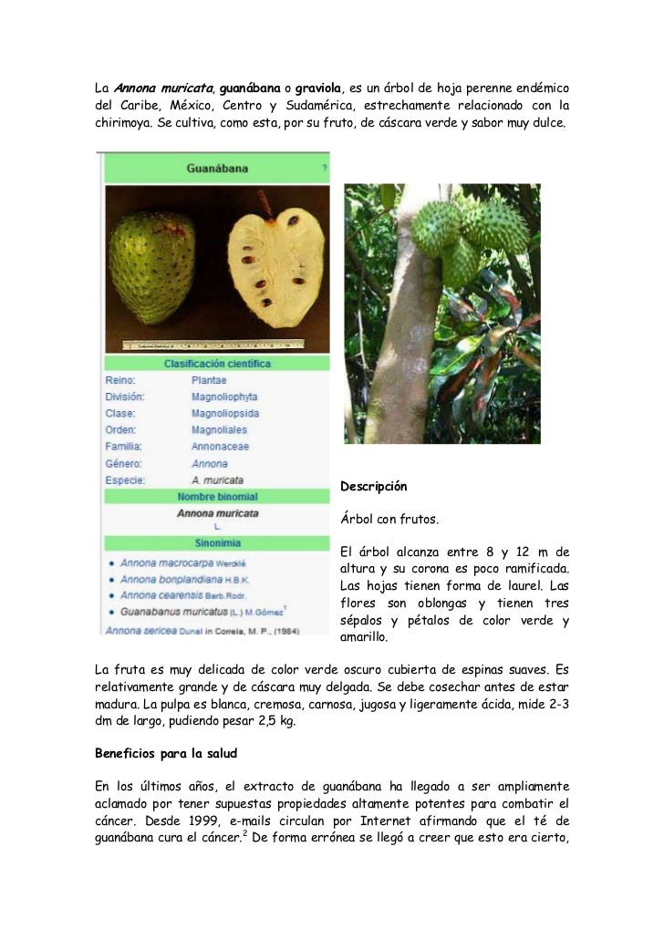 La Annona muricata, guanábana o graviola, es un árbol de hoja perenne endémico del Caribe, México, Centro y Sudamérica, es...