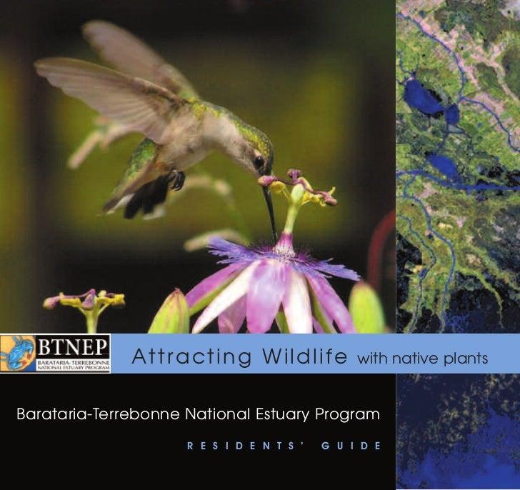 Attracting Wildlife               with native plantsBarataria-Terrebonne National Estuary Program                     R E ...