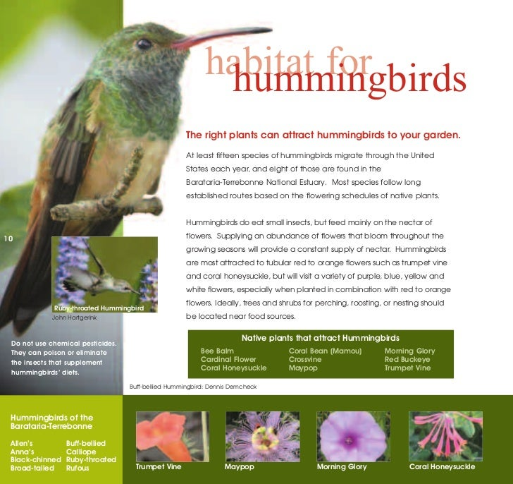 What are some good plants to attract hummingbirds?