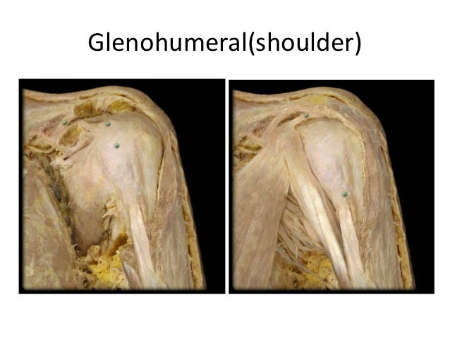 Glenohumeral(shoulder)